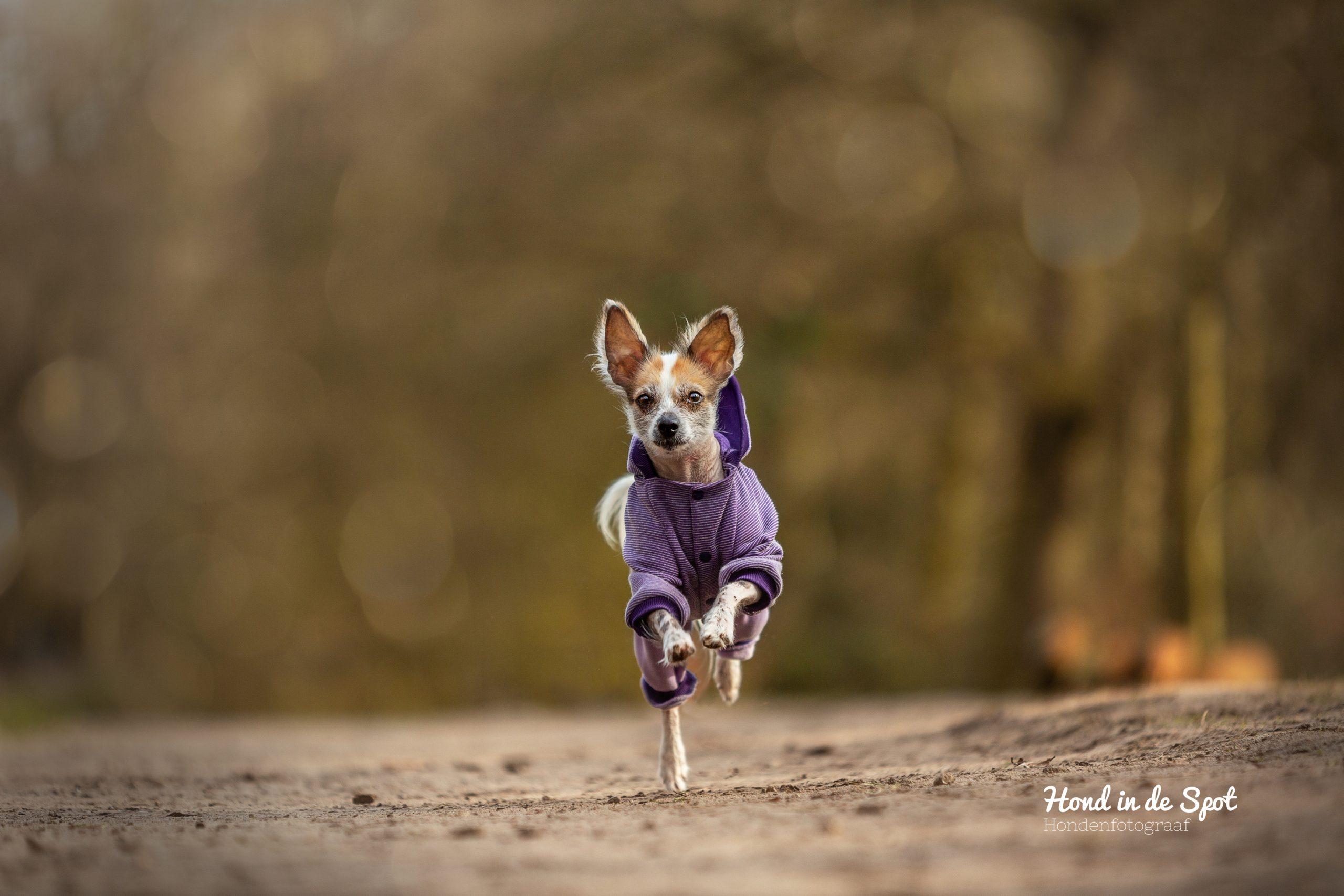 Hondenfotograaf Den Haag