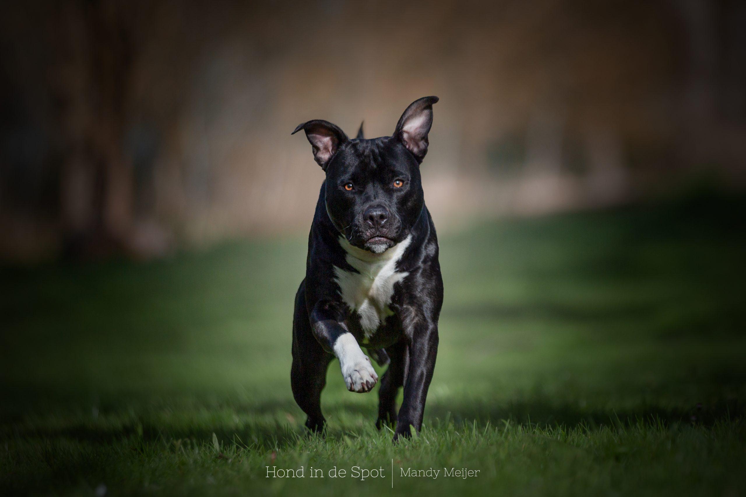 Hondenfotograaf Ridderkerk