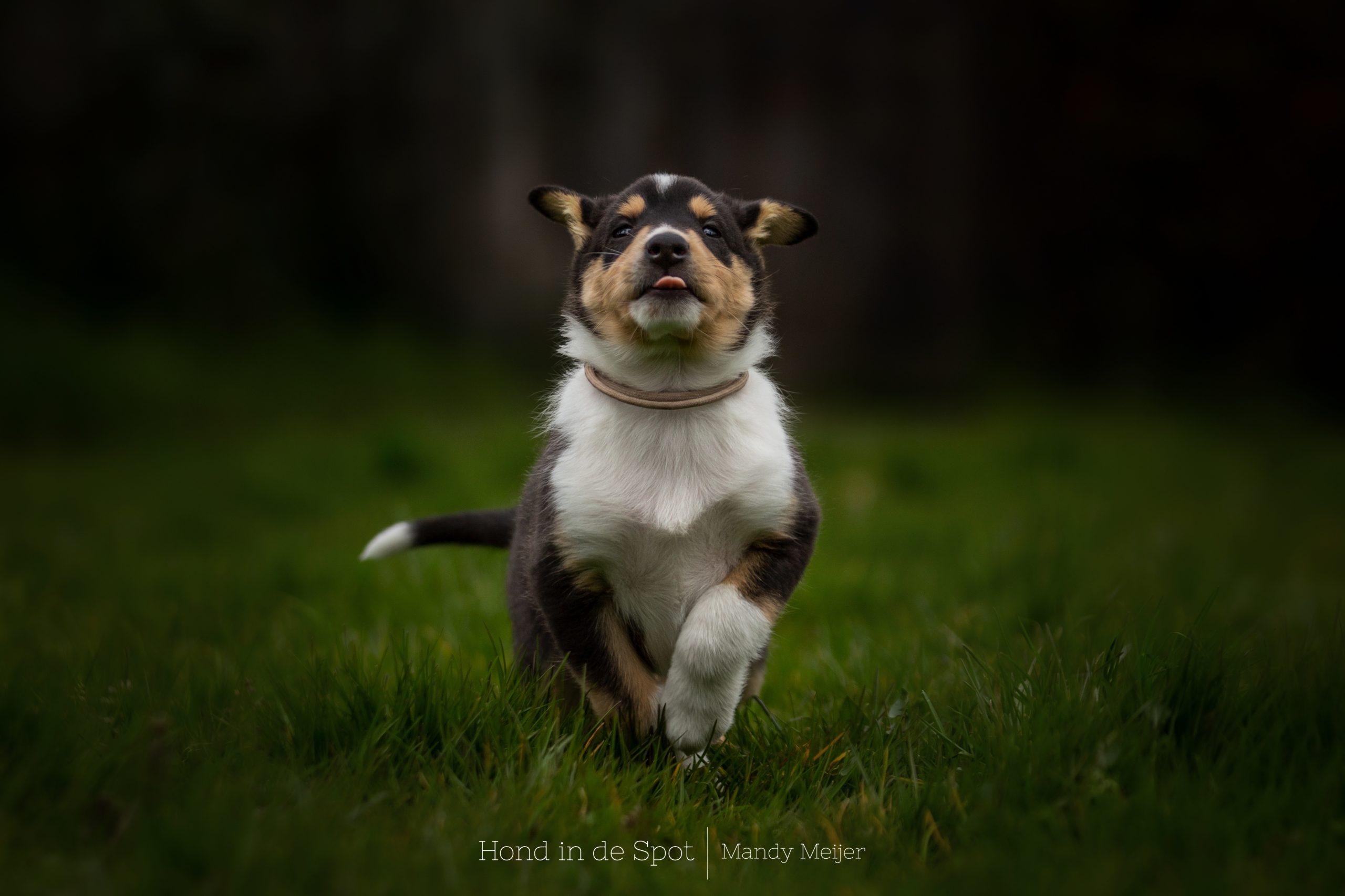 Hondenfotograaf Zuid-Holland