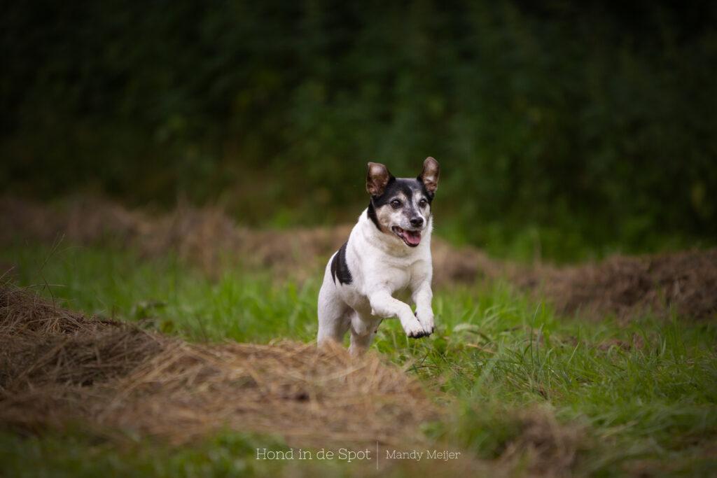 Hondenfotograaf Mandy Meijer