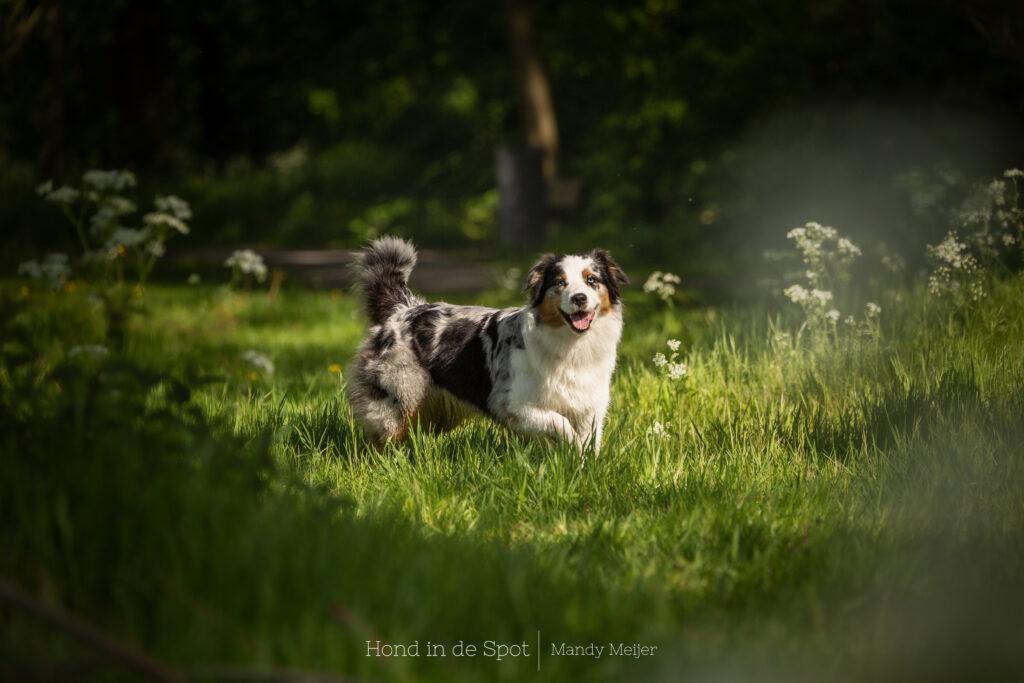 Hondenfotograaf Hond in de Spot