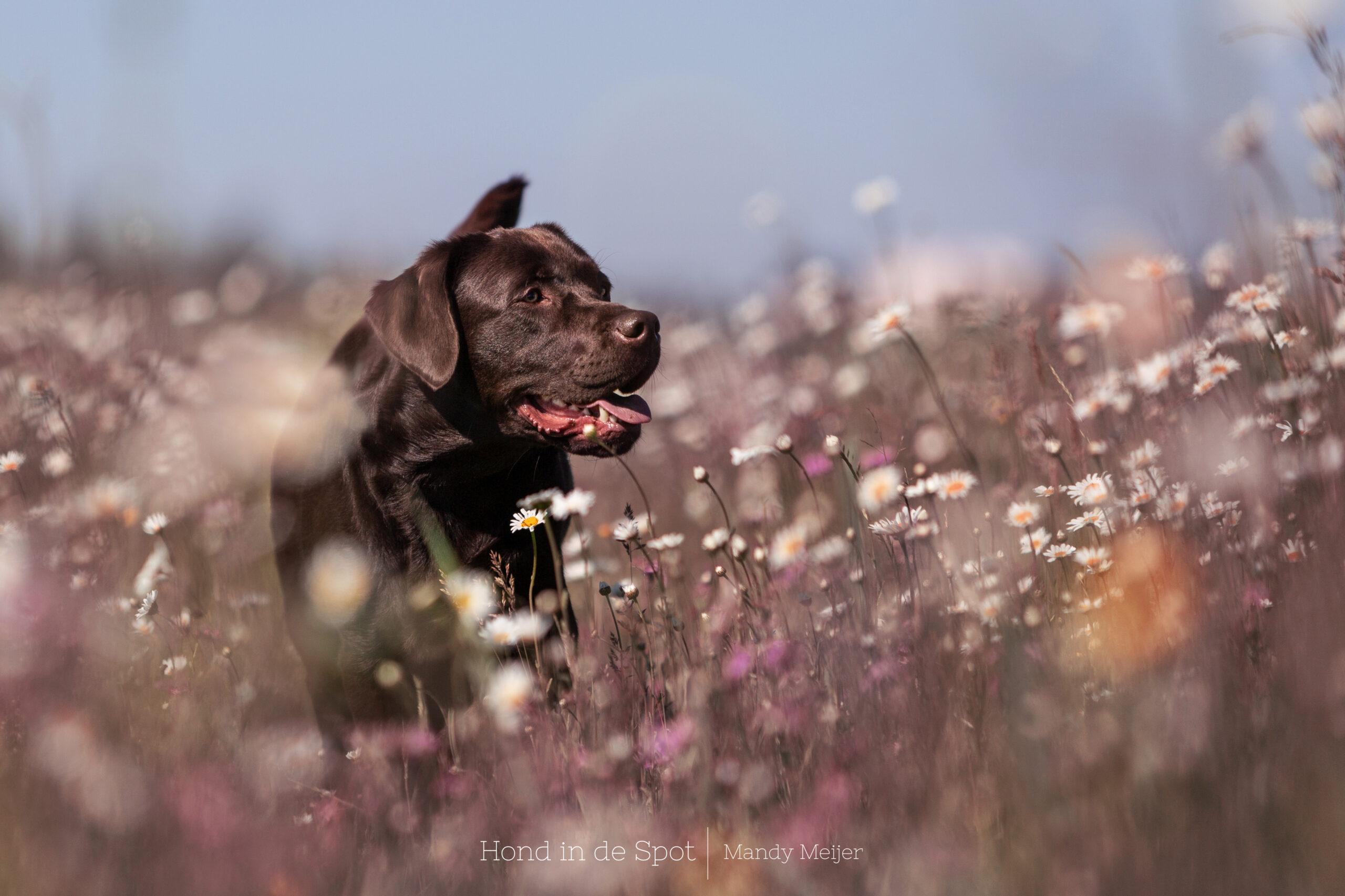 Hondenfotograaf Rotterdam